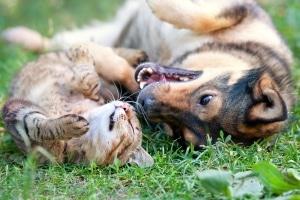 Auch für Haustiere bietet das Recht am Bild der eigenen Sache keinen Schutz.