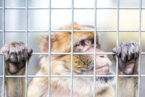 Der Streit um das Urheberrecht an dem Affen-Foto ging um die Welt